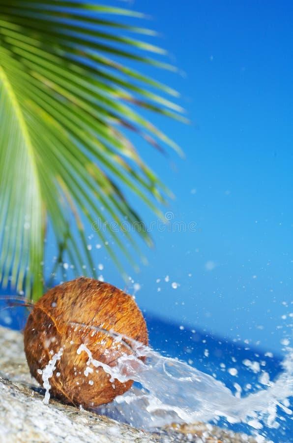 Kokosnusssprung lizenzfreie stockbilder