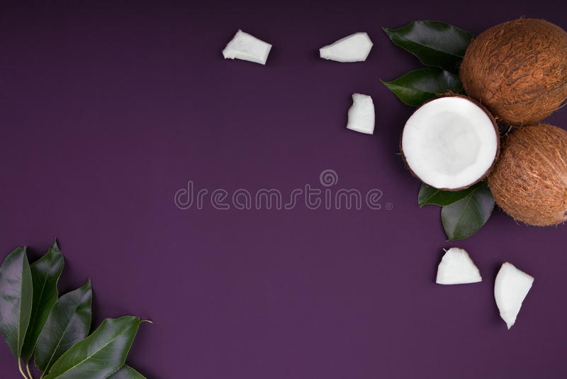 Kokosnusszusammensetzung auf einem violetten Hintergrund Frische, organische, exotische und tropische Kokosnüsse mit grünen Blätt lizenzfreie stockbilder