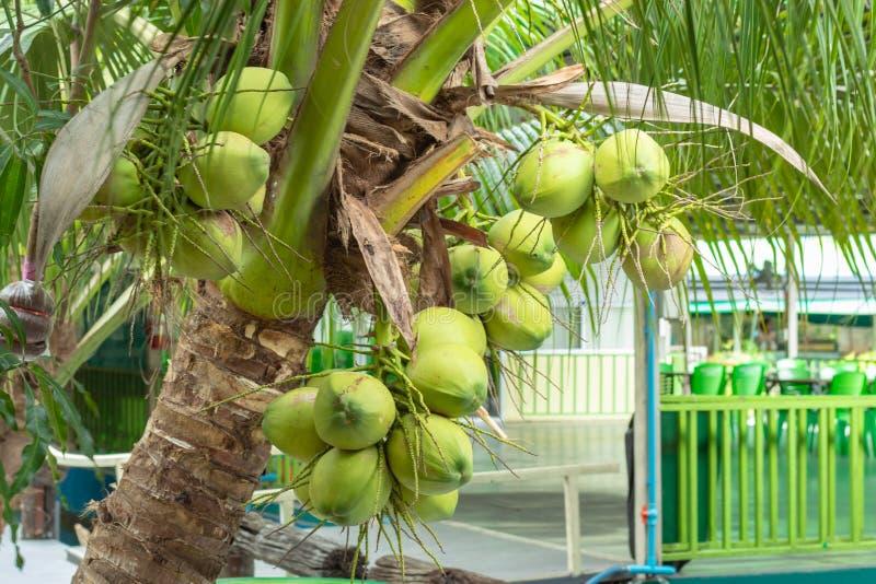 Kokosowa świeża woń w ogródzie, fotografia stock