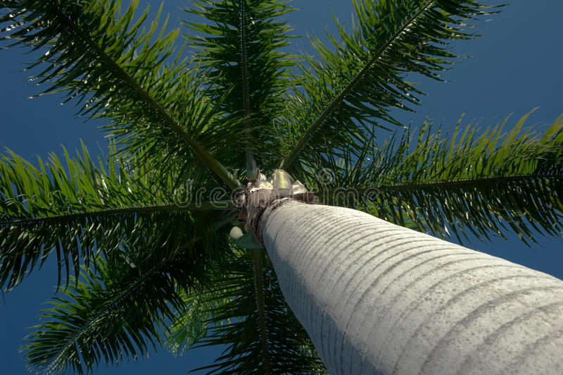 kokosowa korona obrazy royalty free