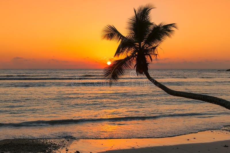 Kokosowa palma przy zmierzchem nad tropikaln? pla?? w Jamajka wyspie karaibskiej zdjęcie royalty free