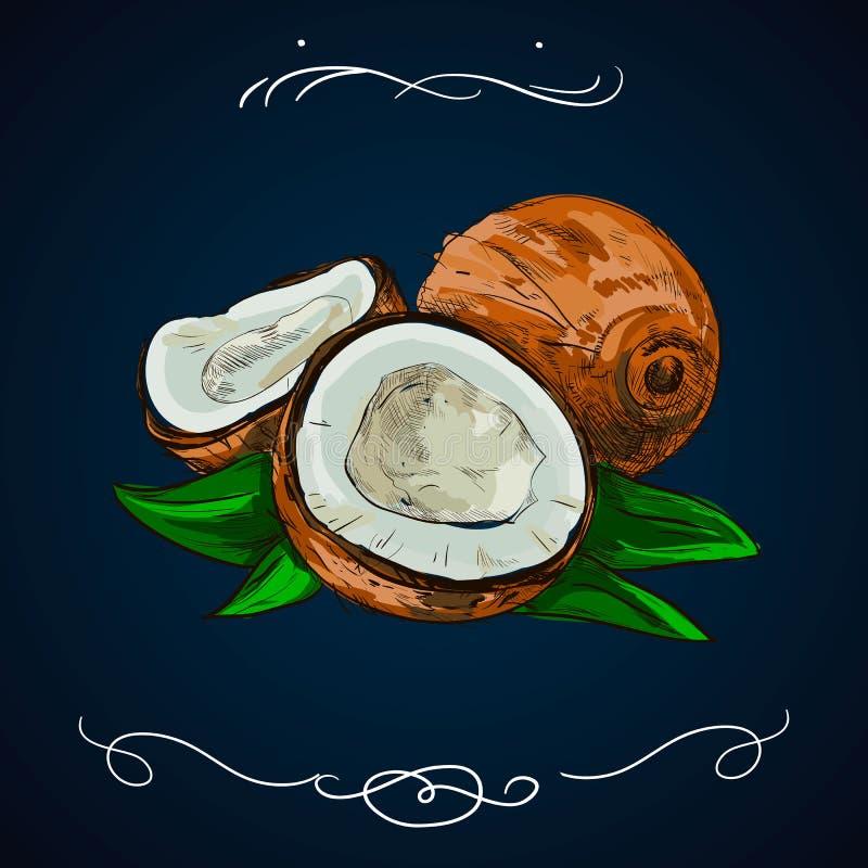 Kokosowa ręka rysująca Botanika wektoru ilustracja Doodle zdrowy odżywki jedzenie Kokosowy rytownictwa nakreślenie ryje linię Org royalty ilustracja