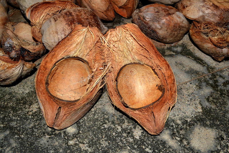 Kokosowa skóra zdjęcie royalty free