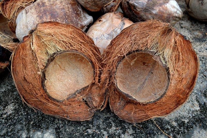 Kokosowa skóra obraz royalty free