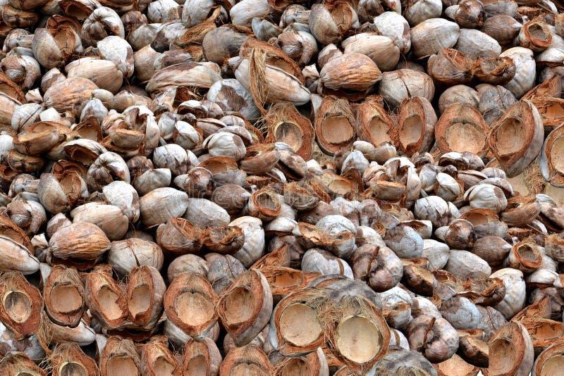 Kokosowa skóra zdjęcia stock