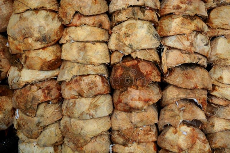 Kokosowa skorupa zdjęcia stock