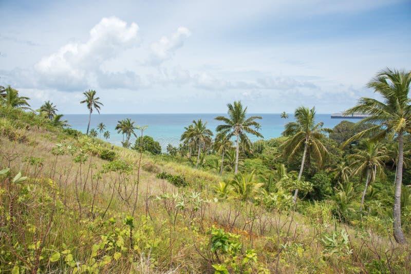 Kokosowe palmy: Dravuni wyspa fotografia stock