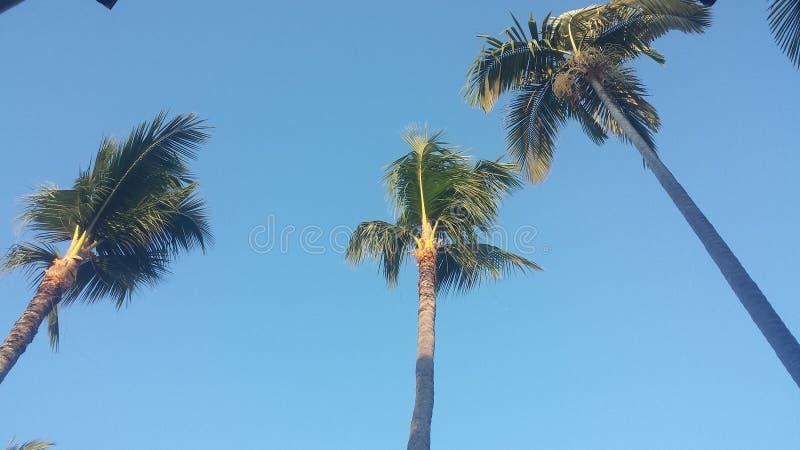 Kokosowe palmy przy zmierzchem zdjęcie royalty free