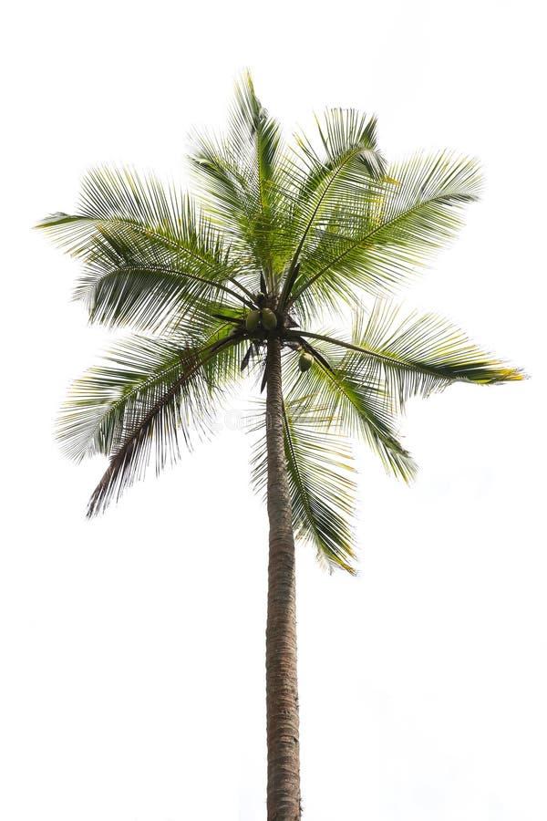 kokosowego projekta grunge stary palmowy pocztówkowy retro styl fotografia stock