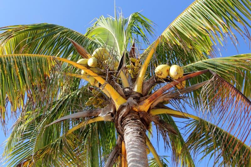 kokosowego projekta grunge stary palmowy pocztówkowy retro styl zdjęcia royalty free