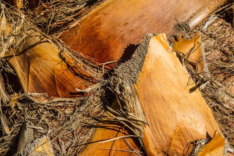 Kokosowej palmy cortex Fotografia brać w Mallorca, Hiszpania zdjęcie stock