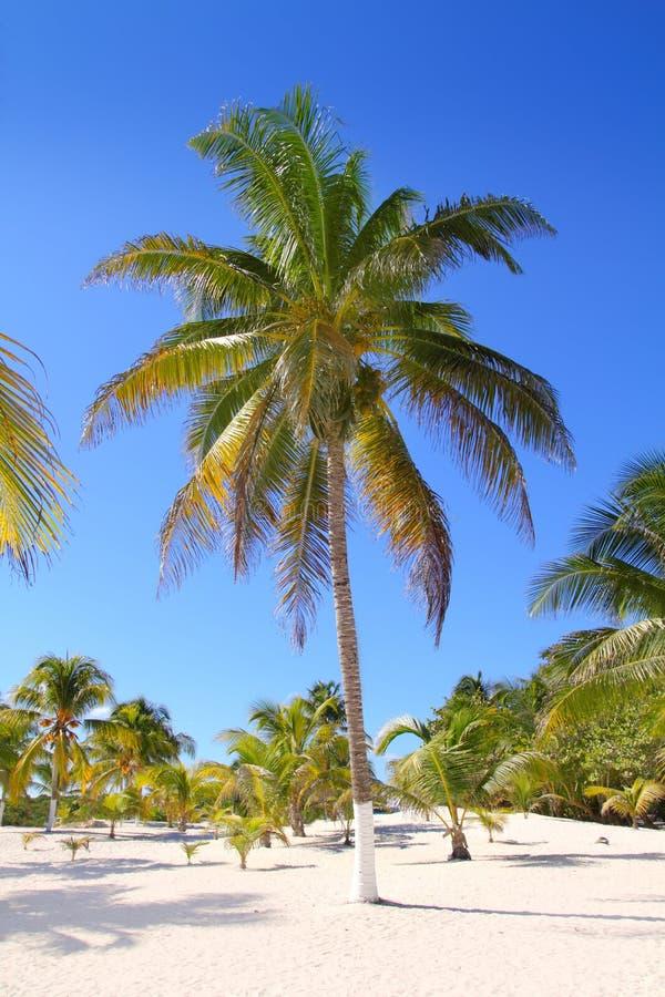 Kokosowej Palmy Raju Piaska Drzew Tropikalny Biel Obraz Royalty Free
