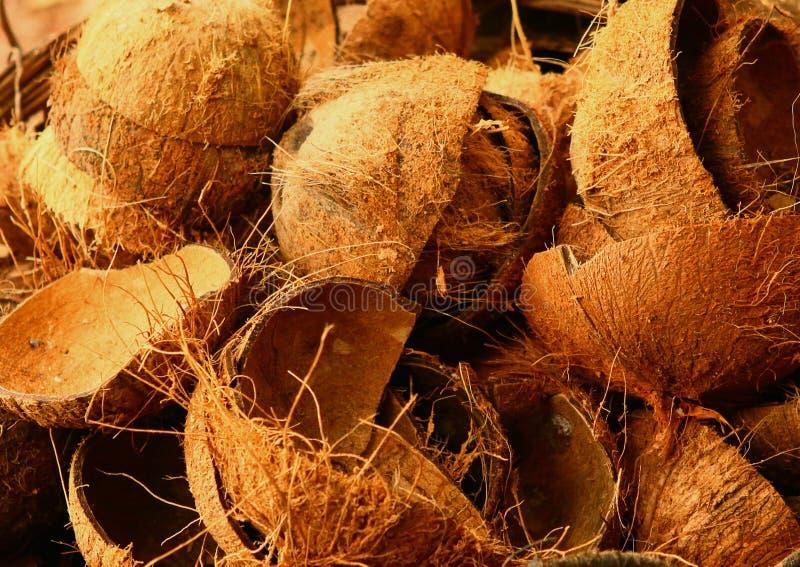 Kokosowej skorupy pozostawiony zakończenie w górę fotografii obraz stock