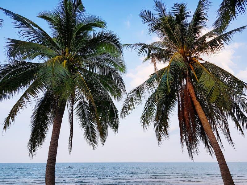 Kokosowi drzewa stoi przy raj plażą obrazy stock