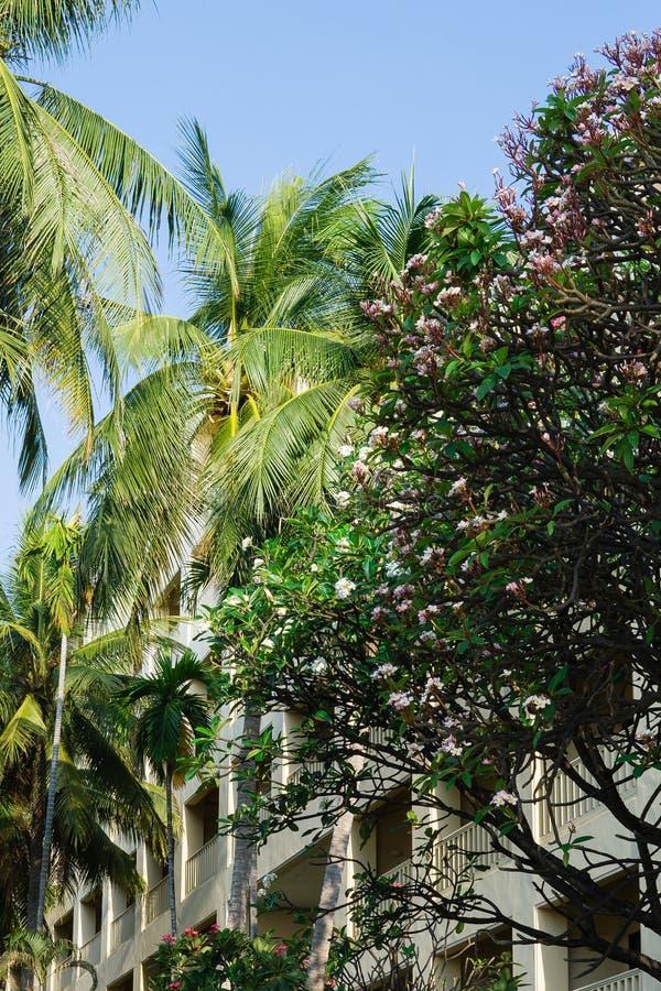 Kokosowi drzewka palmowe, plumeria, niebieskie niebo i architektura, zdjęcia royalty free