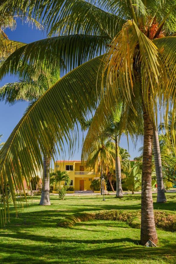 Kokosowi drzewka palmowe w tropikalnym kurorcie zdjęcia stock