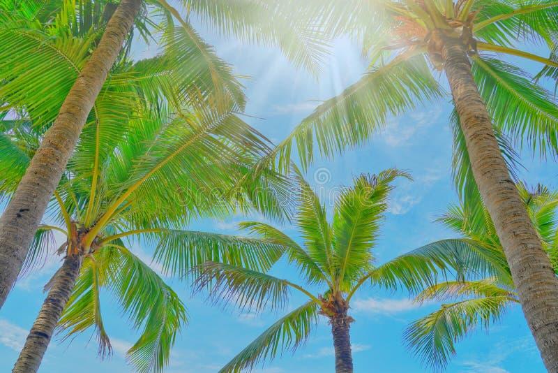 Kokosowi drzewka palmowe widok i niebieskie niebo na plaży fotografia royalty free