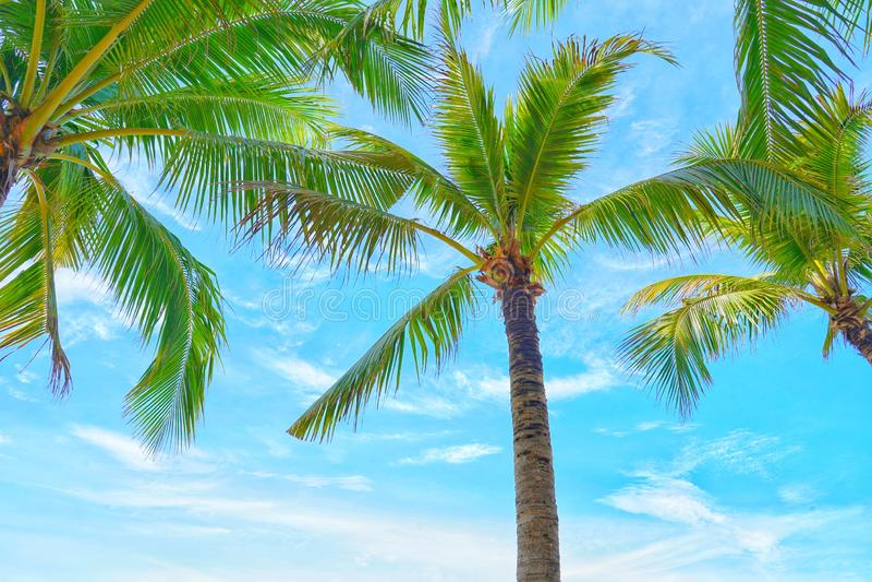 Kokosowi drzewka palmowe widok i niebieskie niebo na plaży obraz stock