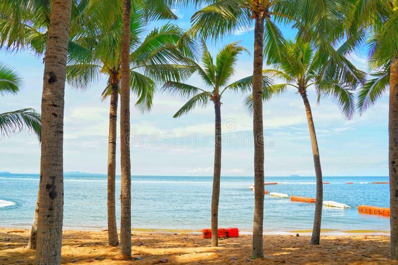 Kokosowi drzewka palmowe widok i niebieskie niebo na plaży fotografia stock