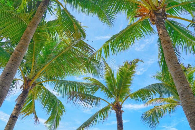 Kokosowi drzewka palmowe widok i niebieskie niebo na plaży obraz royalty free