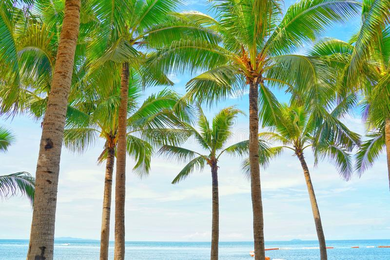 Kokosowi drzewka palmowe widok i niebieskie niebo na plaży zdjęcie stock