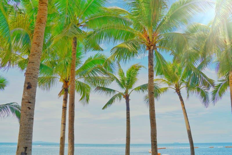 Kokosowi drzewka palmowe widok i niebieskie niebo na plaży zdjęcia stock