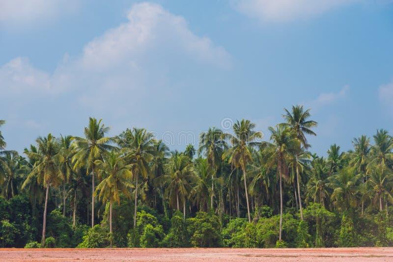kokosowi drzewka palmowe z niebieskim niebem obraz royalty free
