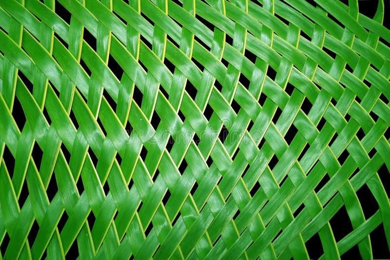 Kokosowi liście fotografia stock