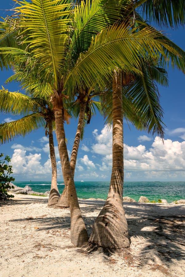 Kokosowy drzewko palmowe na plaży Floryda fotografia royalty free
