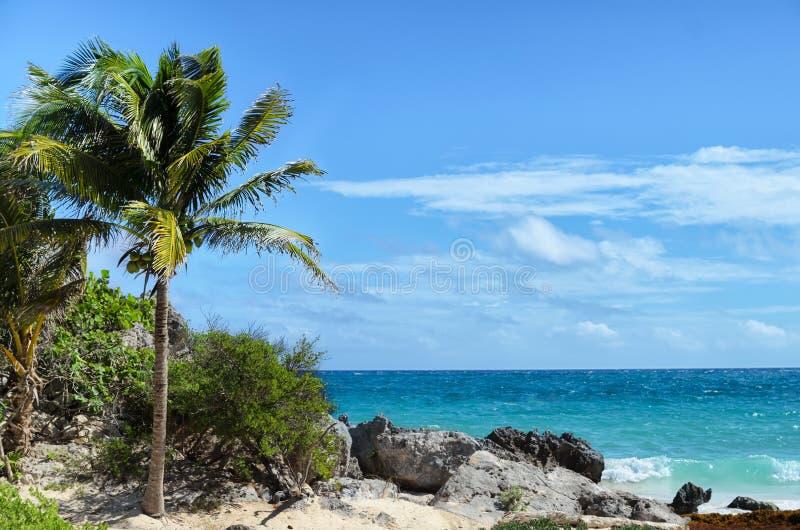 Kokosowy drzewko palmowe przy skalistą białą piasek plażą na wietrznym dniu zdjęcie royalty free