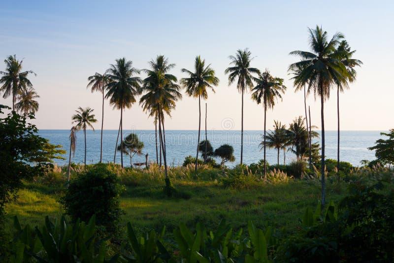 Kokosowy drzewko palmowe z błękitnym morzem zdjęcie stock