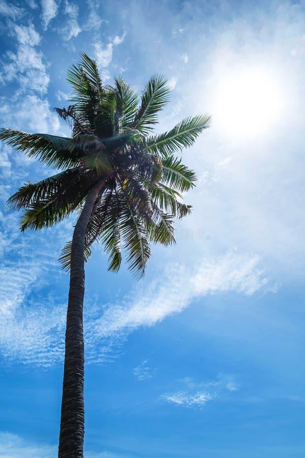 Kokosowy drzewo na niebie z słońce obiektywu racy skutkami obraz stock