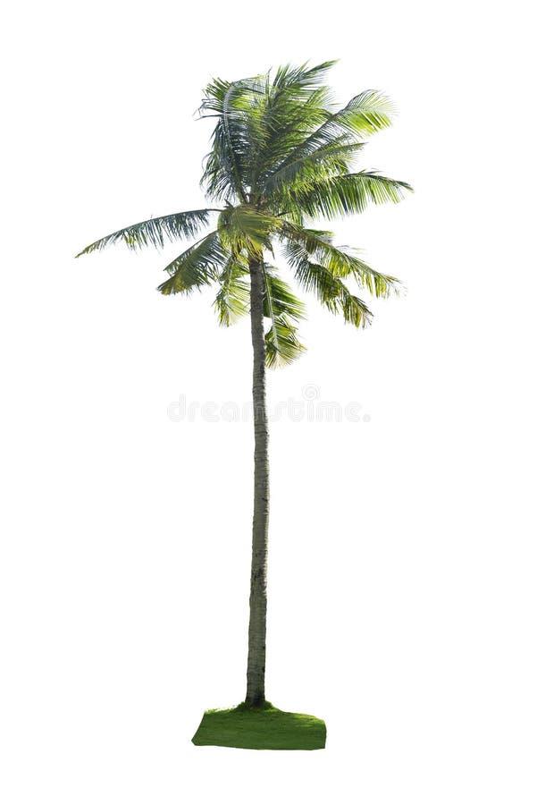 Kokosowy drzewo odizolowywający obrazy stock