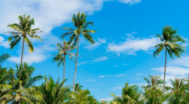 Kokosowy drzewo przeciw niebieskiego nieba i bielu chmurom Lato i raju plażowy pojęcie tropikalny kokosowy drzewko palmowe katya  zdjęcie royalty free