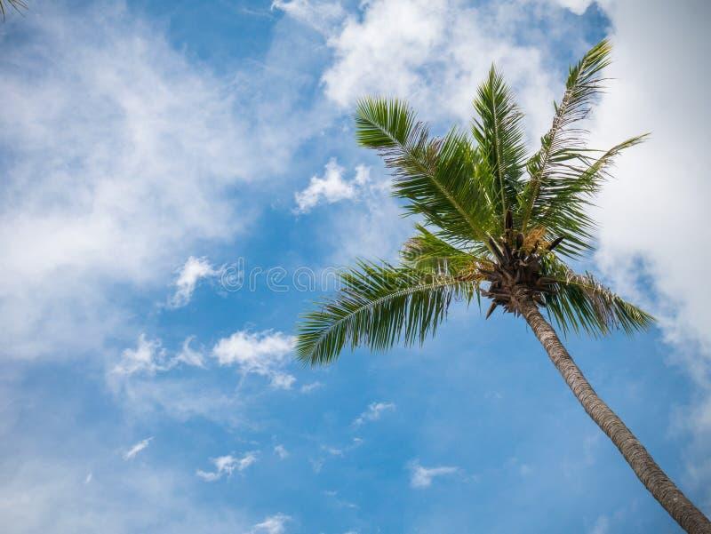 Kokosowy drzewo z niebieskie niebo widokiem na plaży zdjęcia royalty free