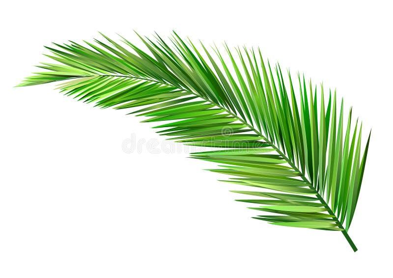 Kokosowy liść ilustracja wektor