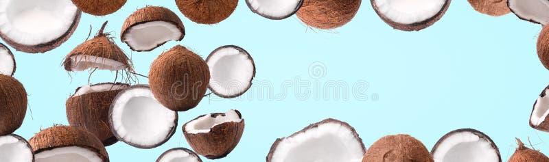 Kokosowy panoramiczny egzamin próbny w górę zdjęcia stock