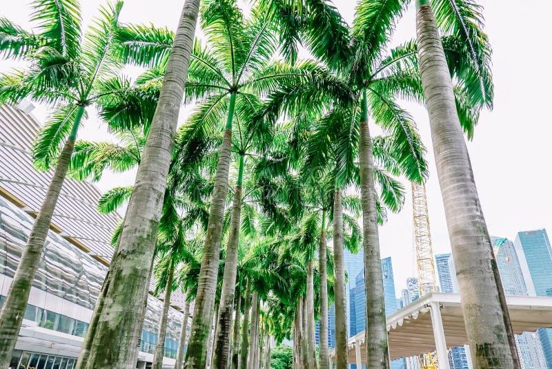 Kokosowy plenerowy marina zatoka Singapore i zdjęcia royalty free