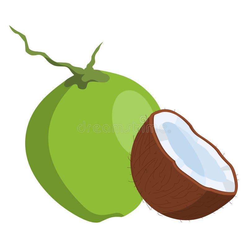 Kokosowy wektor Świeża kokosowa ilustracja ilustracji