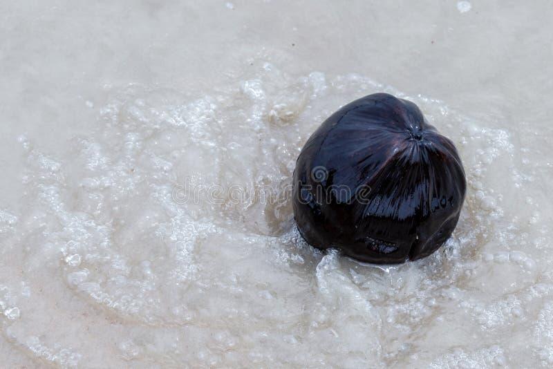 Kokosowy wielki czarny zmrok w przejrzystej wodzie na tle białego piaska tropikalny ocean w falach w górę obraz royalty free