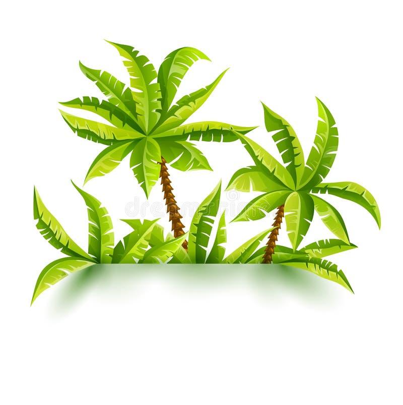 Kokosowych palm dżungli wektorowy ilustracyjny las tropikalny ilustracja wektor