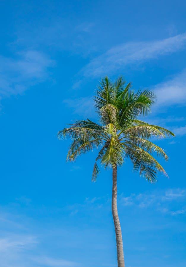 Kokospalm över blå himmel arkivbilder