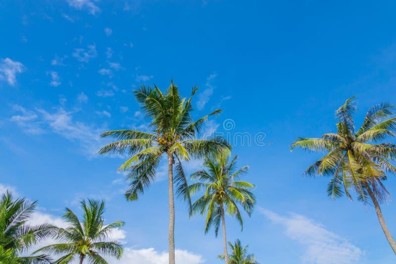 Kokospalm över blå himmel arkivfoto
