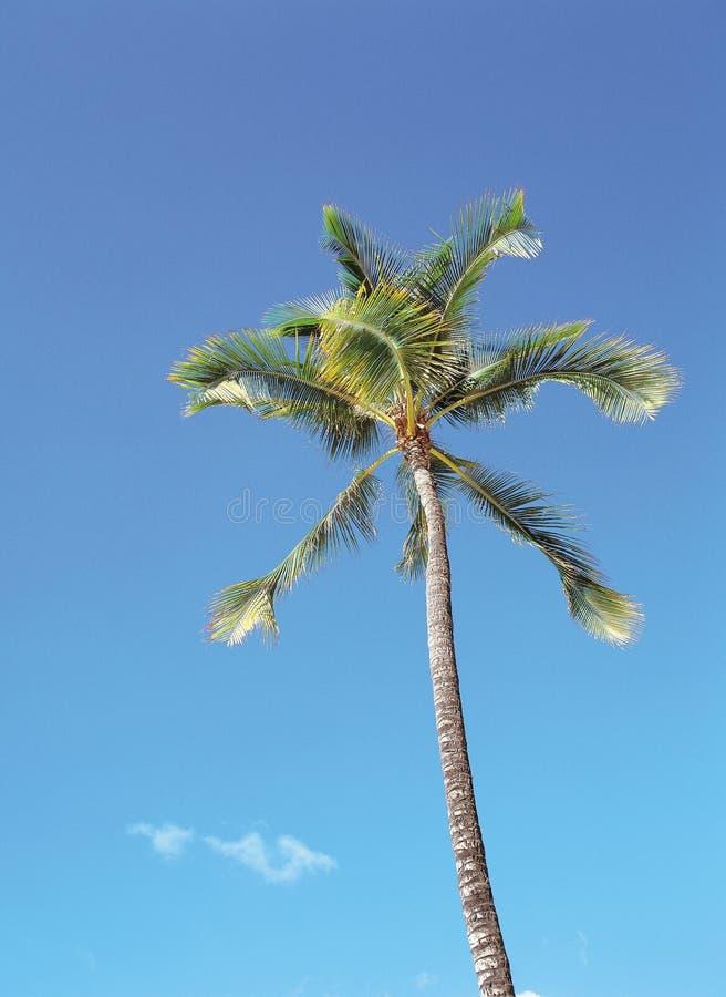 Kokospalm stock foto's
