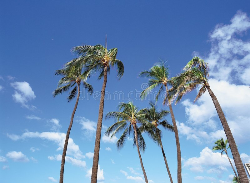 Kokospalm stock fotografie