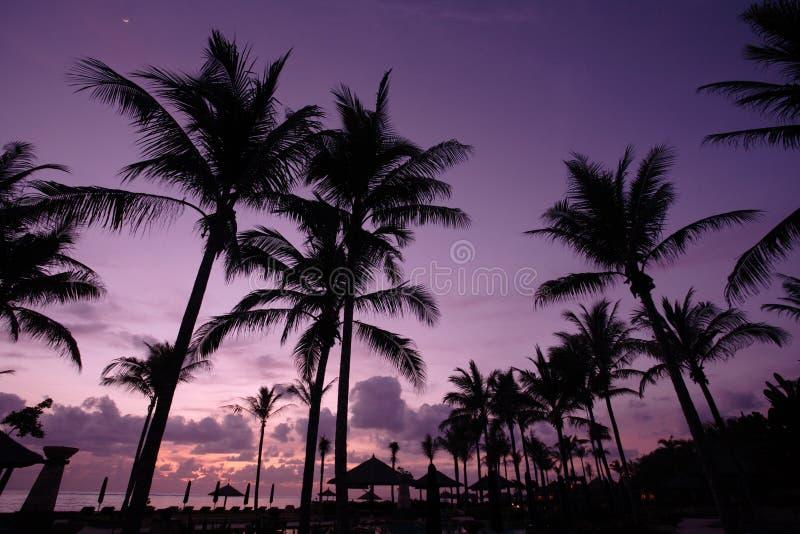Kokospalm bij zonsopgang stock foto's