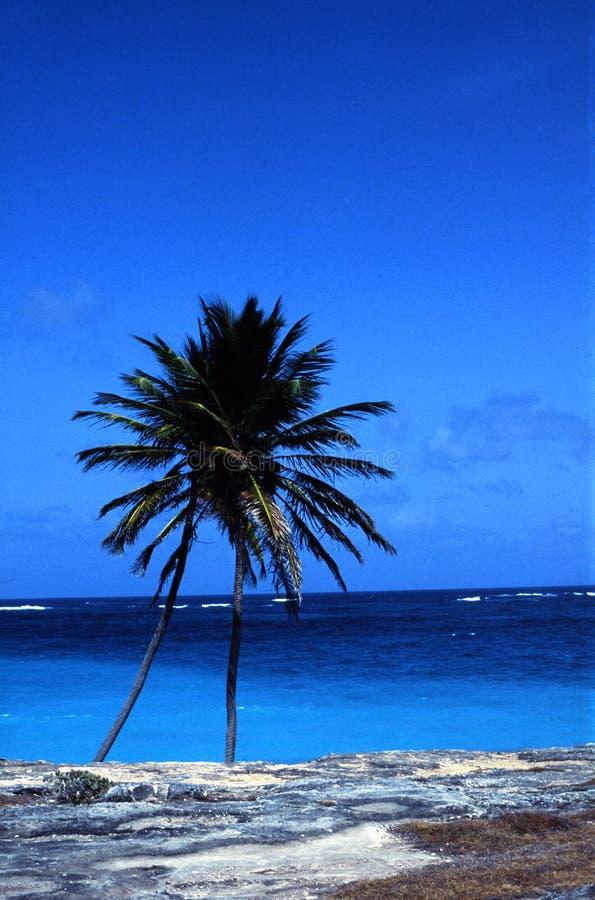 Kokospalm en oceaan royalty-vrije stock foto's