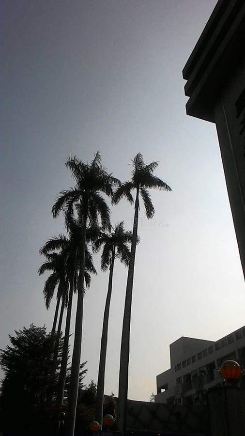 Kokospalm framme av skola royaltyfri foto
