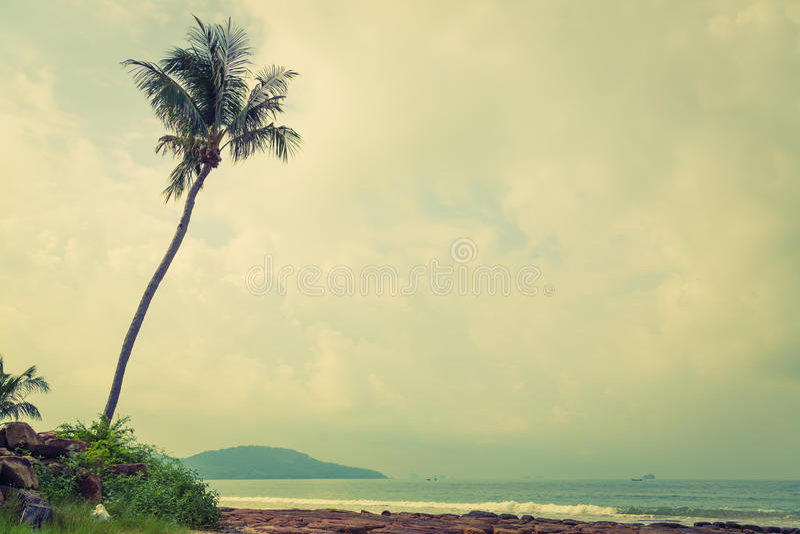 Kokospalm (Gefiltreerd beeld verwerkt uitstekend effect ) royalty-vrije stock foto