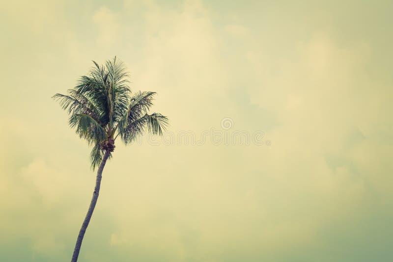 Kokospalm (Gefiltreerd beeld verwerkt uitstekend effect ) stock fotografie